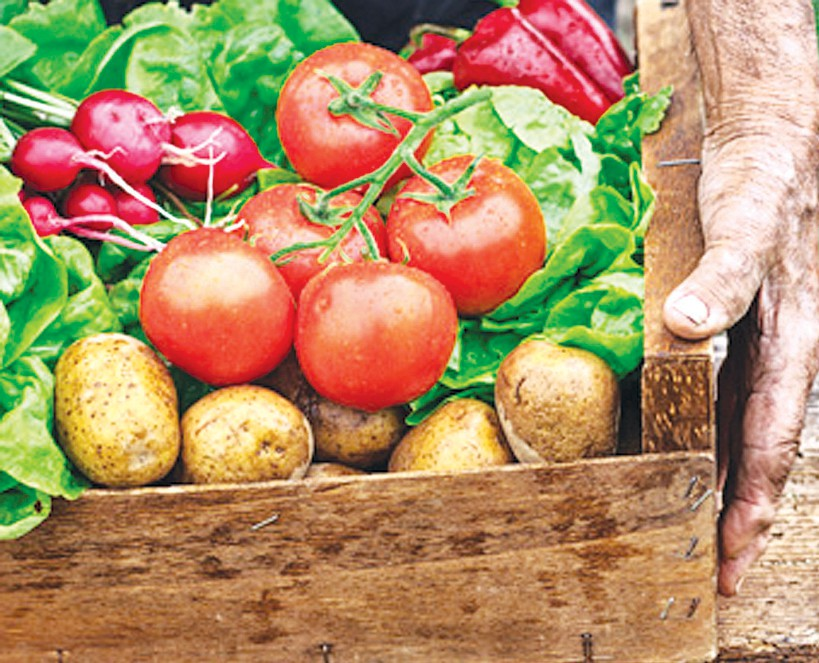 Get Prepared For The Spring Season By Learning What Vegetables To Grow And How To Care For Them By Attending A Class On Spring Vegetable Gardening Taught By